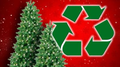 christmas tree recycling 720
