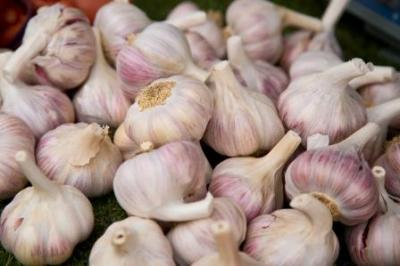 garlic small