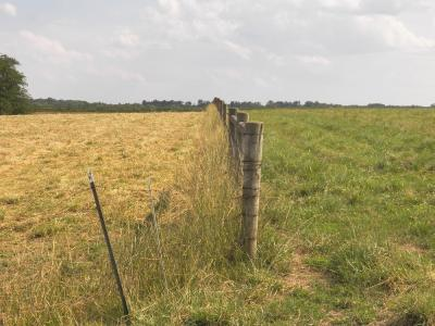 clipped pastures