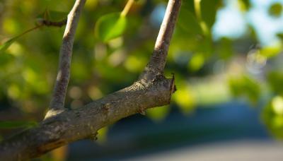 pruning-499257 1920