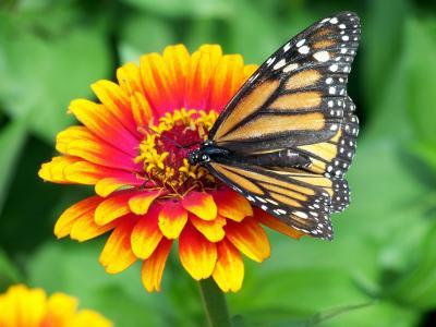 monarch-18140 1920