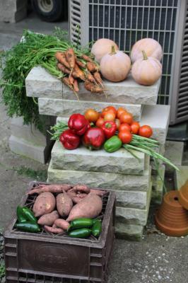 Fall Vegetable Garden Harvest IMG 2411