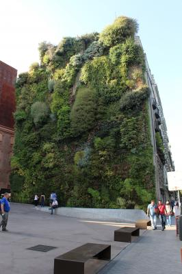 Patrick Blanc Designed Living Wall - Madrid Spain3 1318