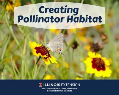 Creating Pollinator Habitat