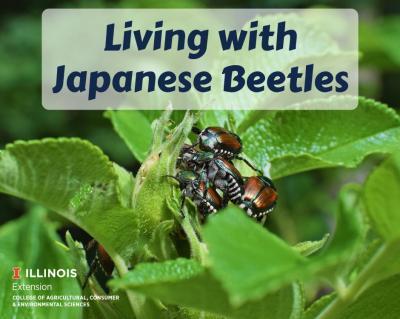 JapaneseBeetles