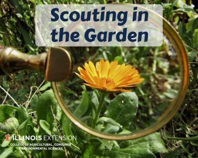 ScoutingintheGarden