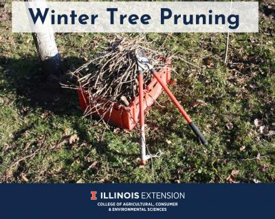 Winter Tree Pruning