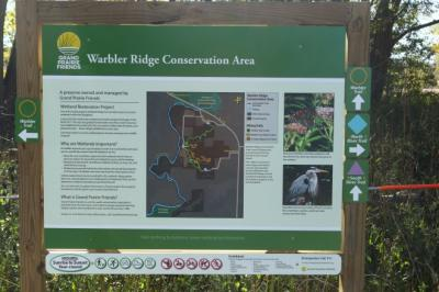 warbler1