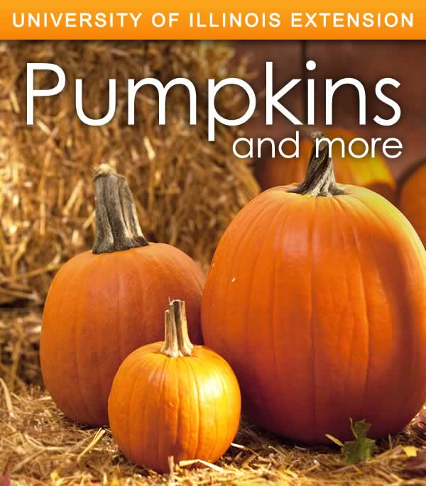 Pinterest Image - Pumpkins and More
