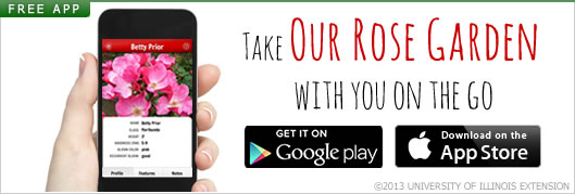 Get Our Rose Garden App on Android or Apple App Store