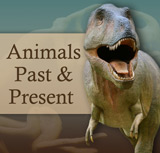Animals Past and Present