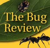 Bug Review