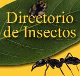 Directorio de Insectos