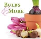Bulbs & More