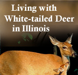 This website provides residents of Illinois with information about how to coexist with Illinois deer.