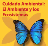 Cuidado Ambiental: El Ambiente y los Ecosistemas