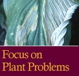Focus on Plant Problems