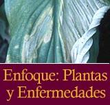 Enfoque: Plantas y Enfermedades