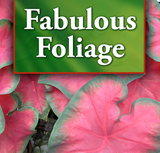 Fabulous Foliage