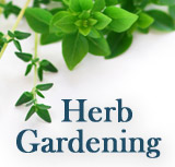 Guide to growing and using common herbs.