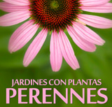 Jardines con Plantas Perennes