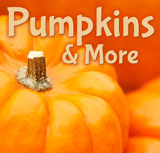 Pumpkins & More