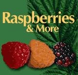 Raspberries & More