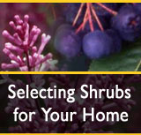 Selecting Shrubs for Your Home