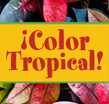 ¡Color Tropical!