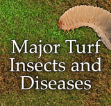Turf Diseases & Insects