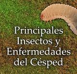 Principales Insectos y Enfermedades del Césped