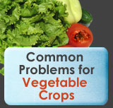 Common Vegetable Problems