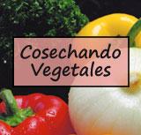 Cosechando Vegetales