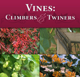Vines: Climbers & Twiners