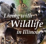Living with Wildlife in Illinois