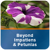 Beyond Impatiens and Petunias