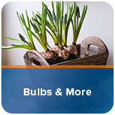 Bulbs & More