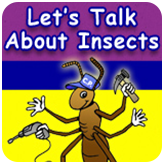 Let's Talk about Insects