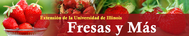 Strawberries & More