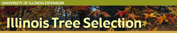 Illinois Tree Selection