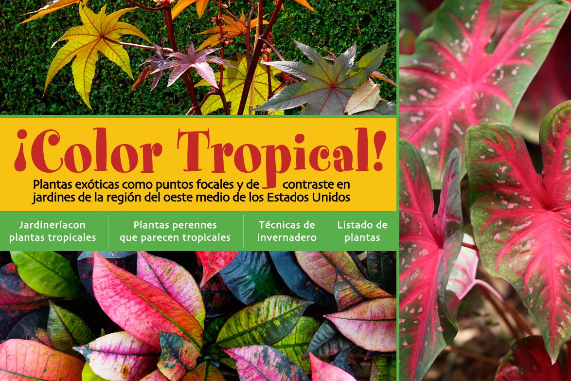 Color tropical algunas plantas tropicales para tener for Plantas ornamentales tropicales