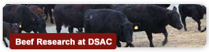 Beef Research at DSAC